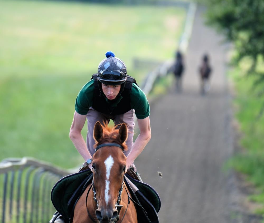 Zac on Gallops