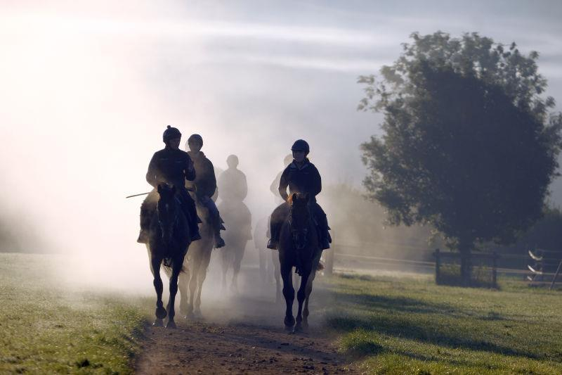 Horses on their way back from the gallop