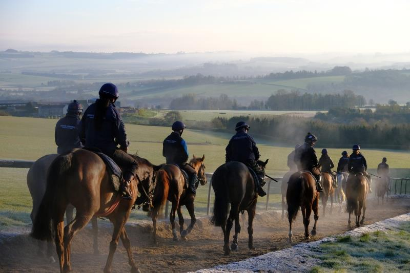 Horses walking down gallops