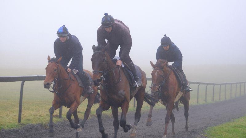 Harry Topper leading Shaluna and Biscuit