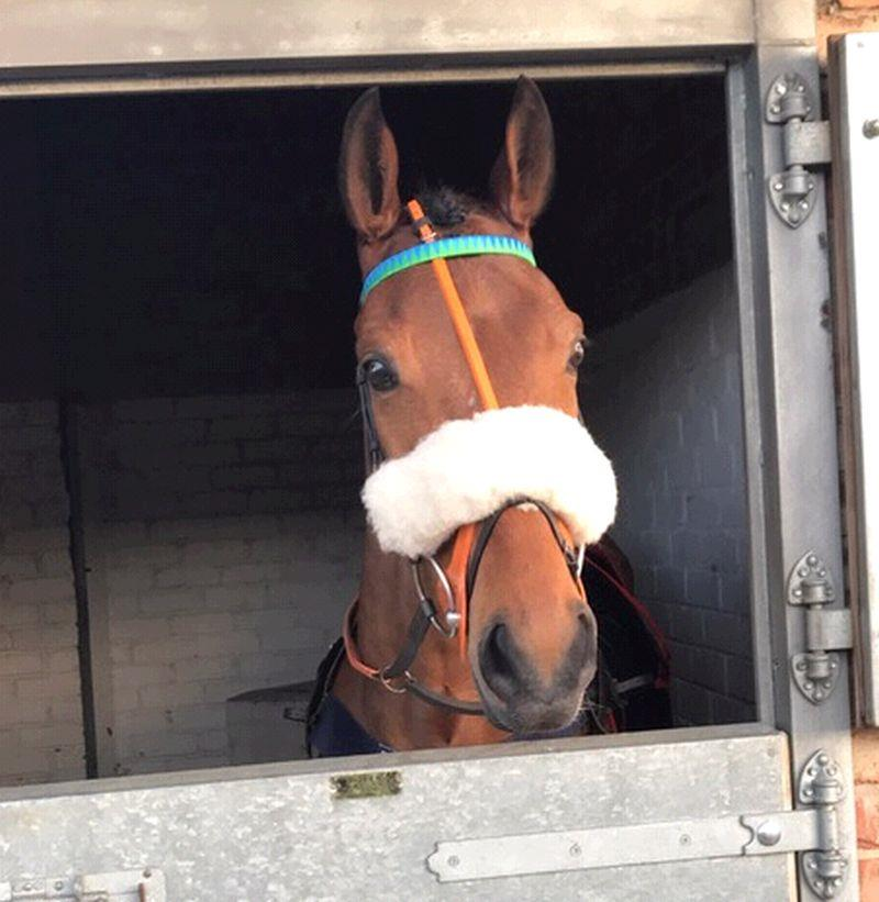Mon Palois in the stables at Wetherby before he went out to win the Bumper on Saturday.