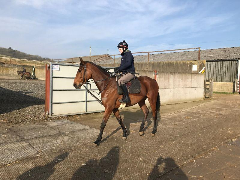 4 year old filly by Midnight Legend out of Even Flo