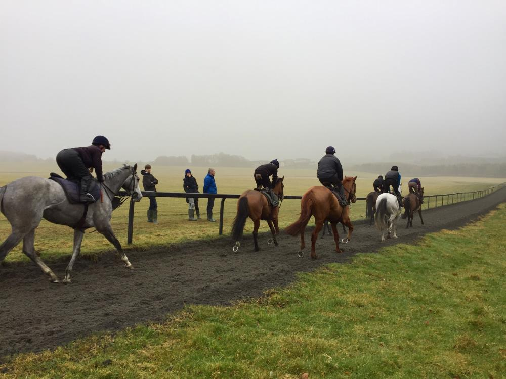 This morning's visitors watching the horses on the gallop