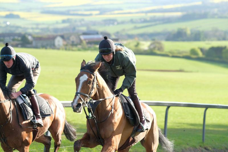 Abbreviate having his last canter before heading to Punchestown tomorrow