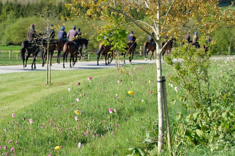 Heading to the gallops.. wild flowers..