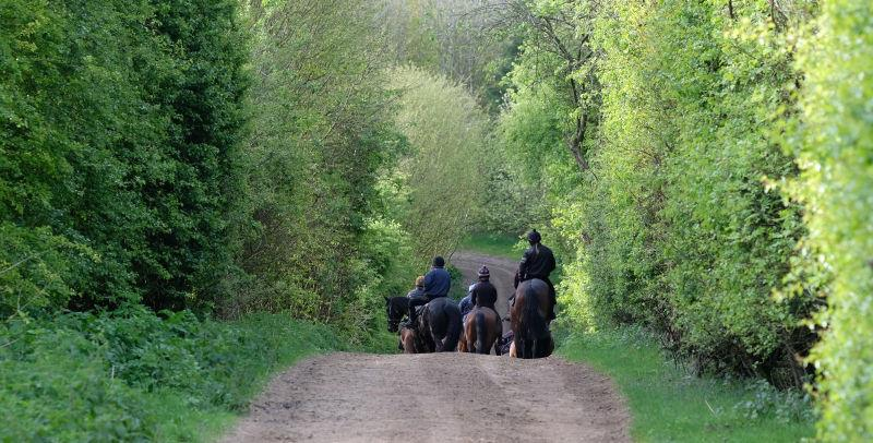 Heading to the gallops this morning