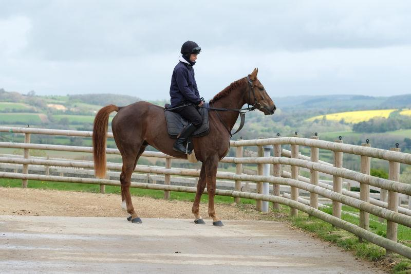 Red River who has just arrived having his first view of the Gloucesterhshire countryside.. he is for sale...