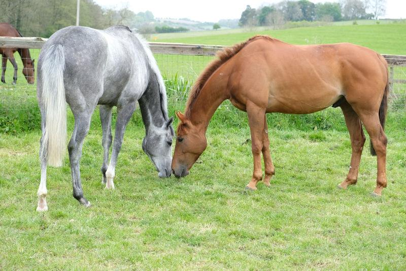 Silver Kayf and Glenforde