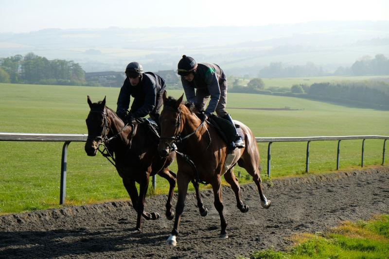 Royal Supremo and Dandy Man working this morning