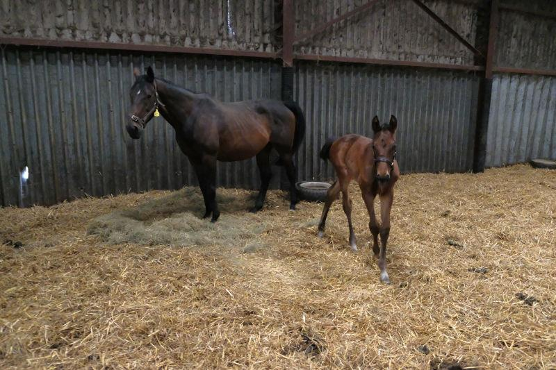 Even Flo with her Lucarno foal