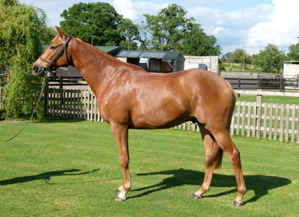 The No Risk At All 3 year old gelding at Martin Jones.. the sire certainly stamps his stock