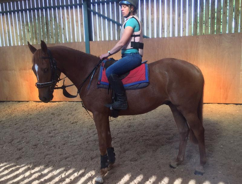 The No Risk At All gelding being sat on for the first time.. stunning horse.. For sale