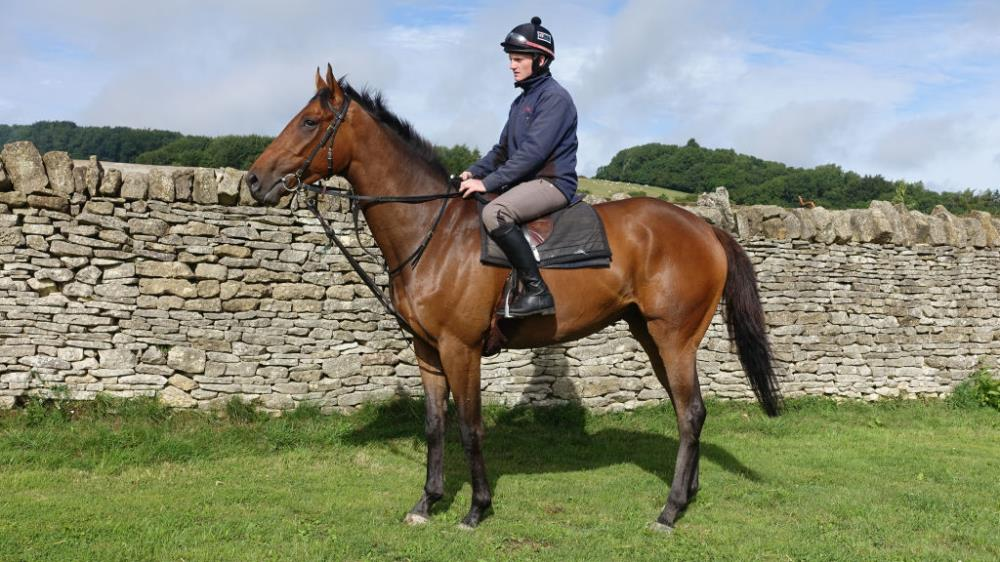 Thibault... the official name for Tim Syder's 4 year old gelding by Kayf Tara out of Seemarye
