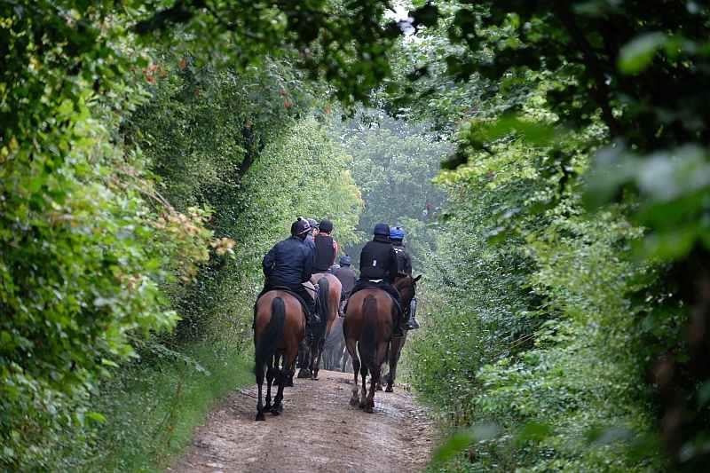 Heading back to the yard through the trees
