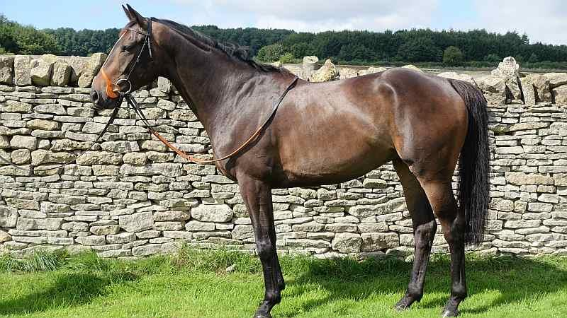 Commadore Barry.. This stunning horse is for sale.. dont miss him he looks pretty useful