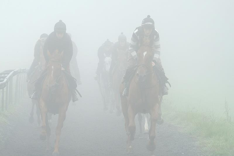 This was the view of my horses this morning...