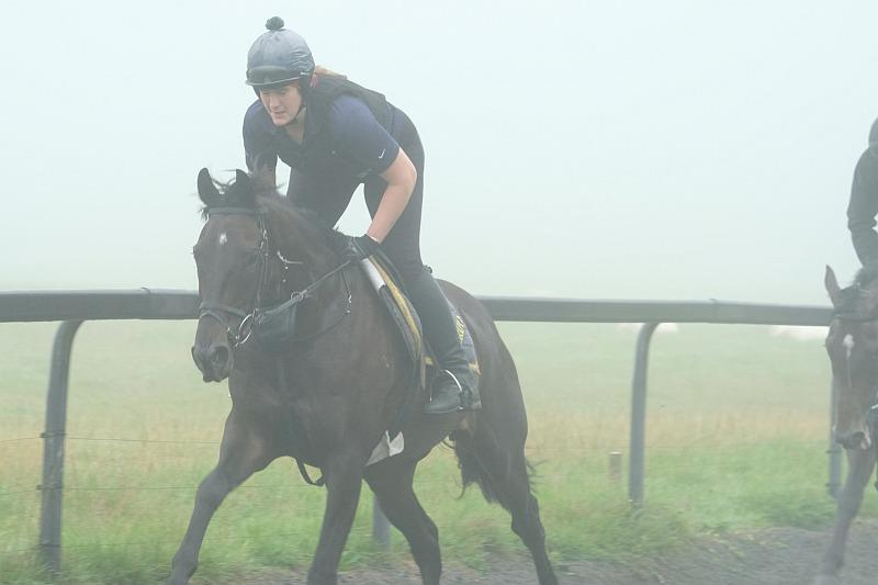 Chateau Robin cantering in the fog