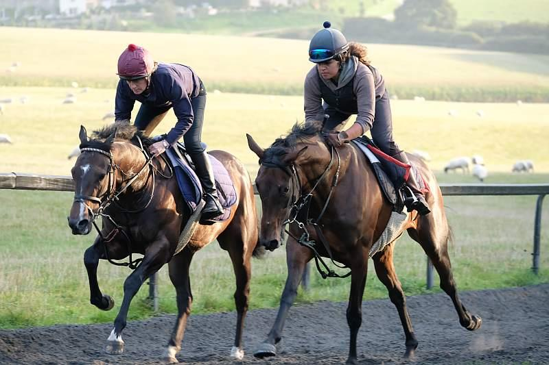 Involve and Diamond Gait working this morning