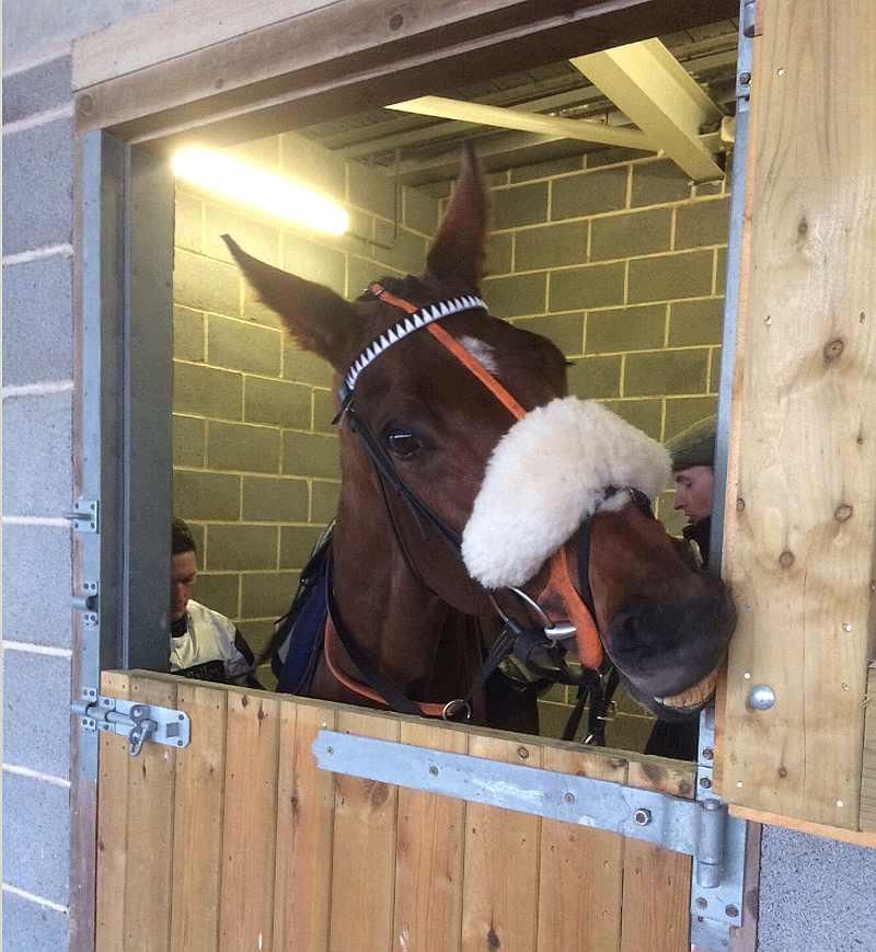 Our Belle Amie in the saddling boxes at Wetherby