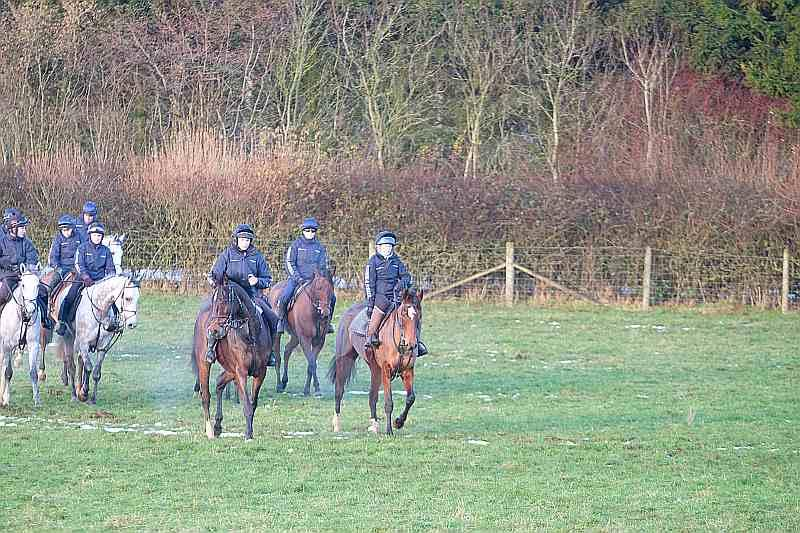 Back down the hill after cantering. Sea Story on the right and Wandrin Star on the left