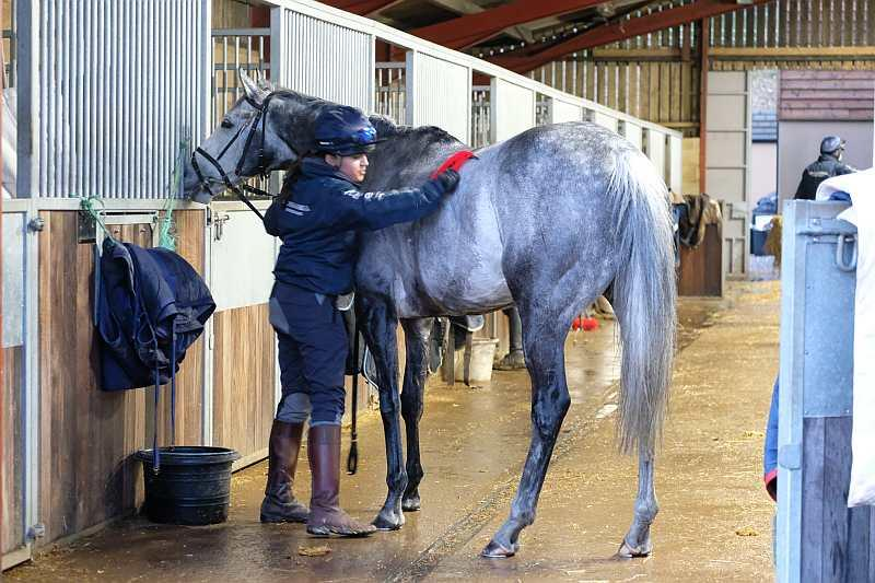 Sunblazer being washed down after first lot.. he is very nosey?