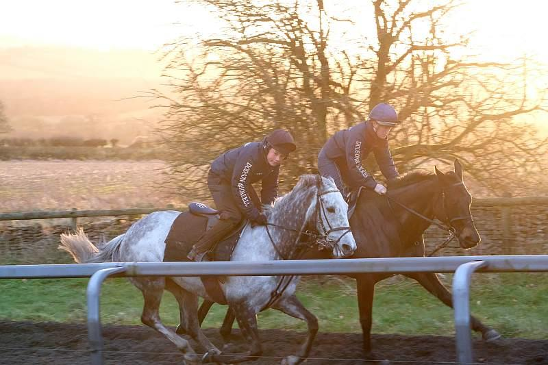 Sunblazer and Cascaye cantering upsides.. Son and Mother