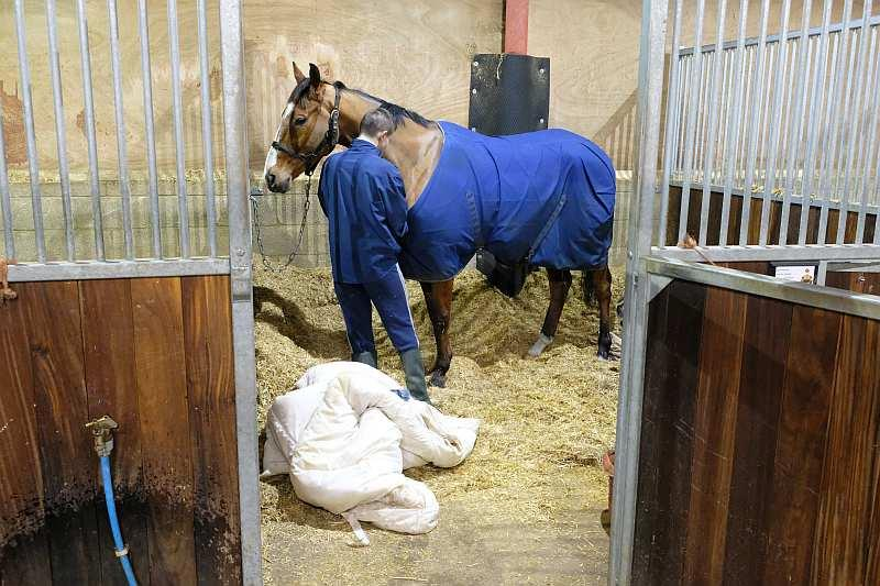 Doctor Haze having his rugs put on