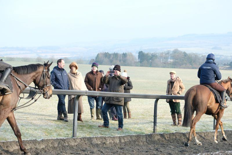 Watching them walk back down the gallops