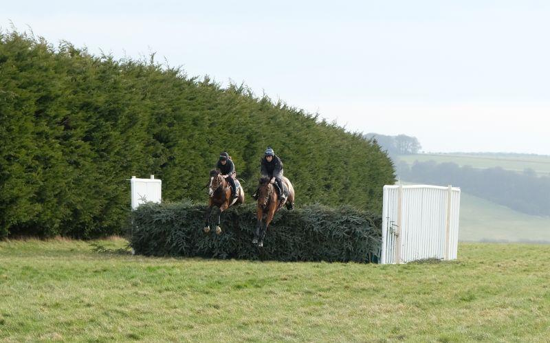 Vincitore (Sarah Rippon) and Gallery Exhibtion jumping the first fence