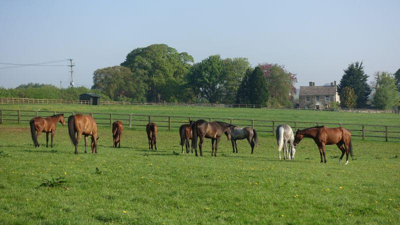 Horses looking relaxed in the field