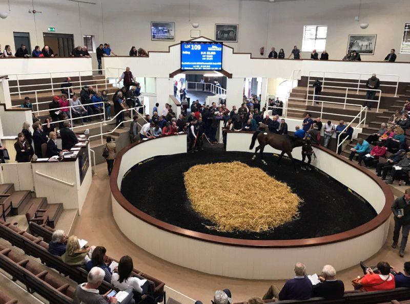 The Tattersalls sale ring with the top lot of the day about to enter..