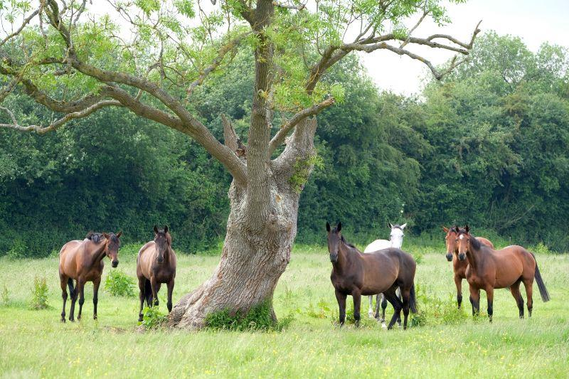 The Mares field. Diamond Gait, A Perfect Gift, Cascaye, Kayf Storm, Subway Surf and Sea Story