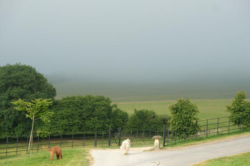 Walking to the gallops this morning.. misty