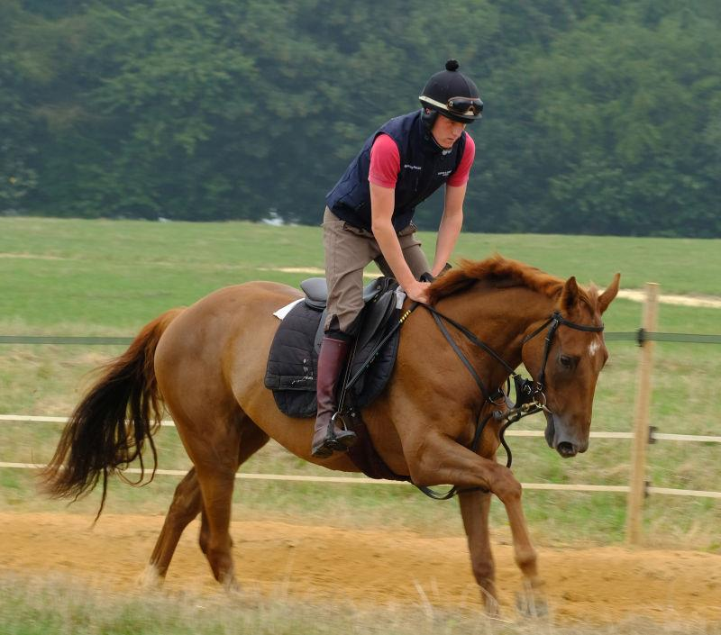 Midnight Legend 3 year old gelding out of Real Treasure.. For Sale