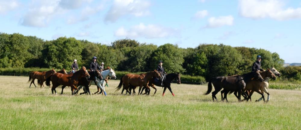 Excercising the local polo team at Thorndale