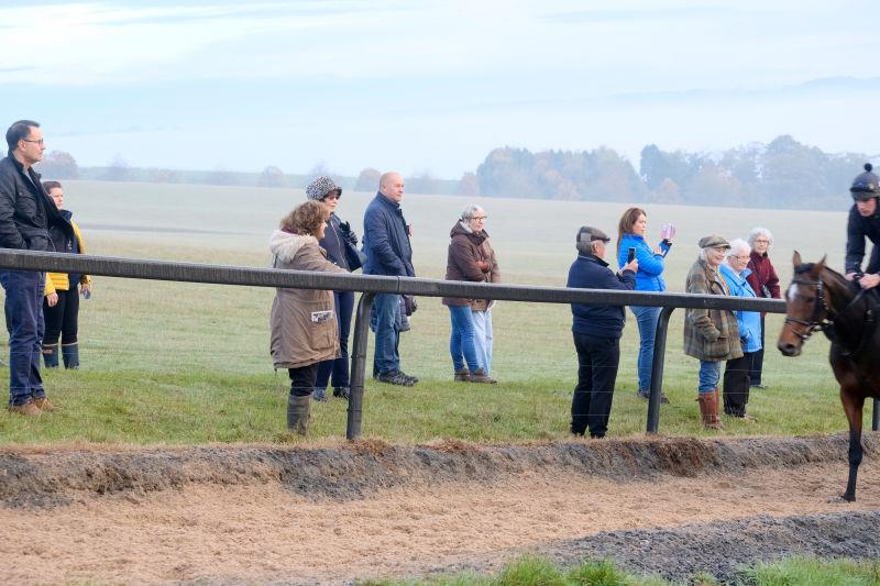 More gallop watching