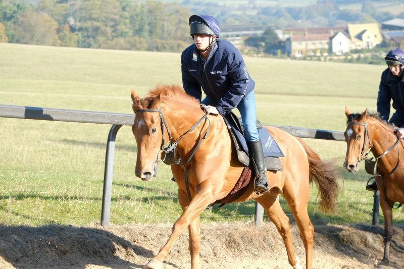 The Shantou gelding heading up the gallops