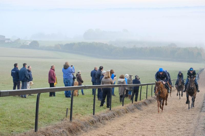 Gallop watching