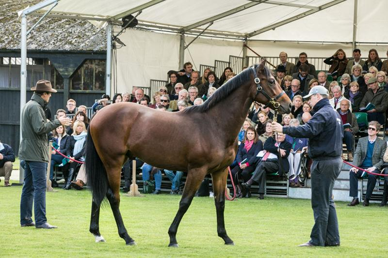 Highclere yearling parade