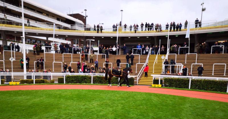 The Cheltenham syndicate horse Hes No Trouble parading at Cheltenham on Saturday