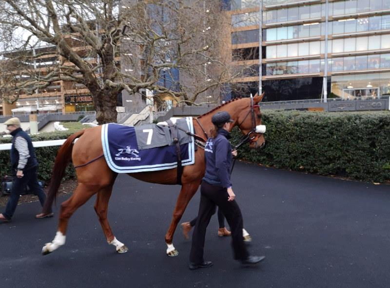 Prince Llywelyn heading to the paddock