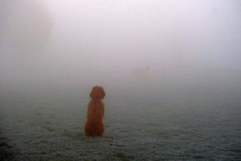 Dougie looking to see if he can see the horses in the fog
