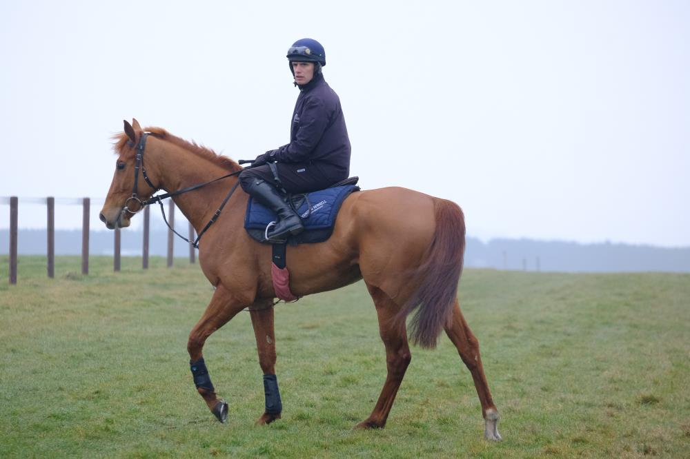 David Bass on Shantou Express