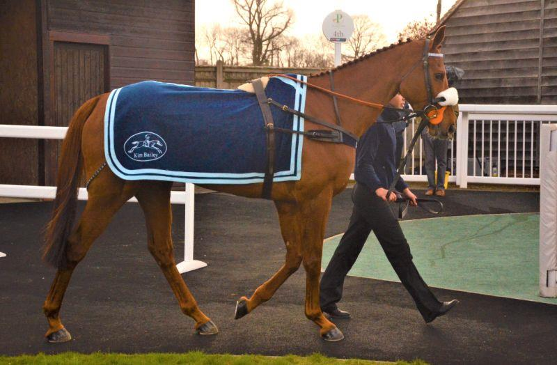 Another Venture in the paddock before his race at Plumpton