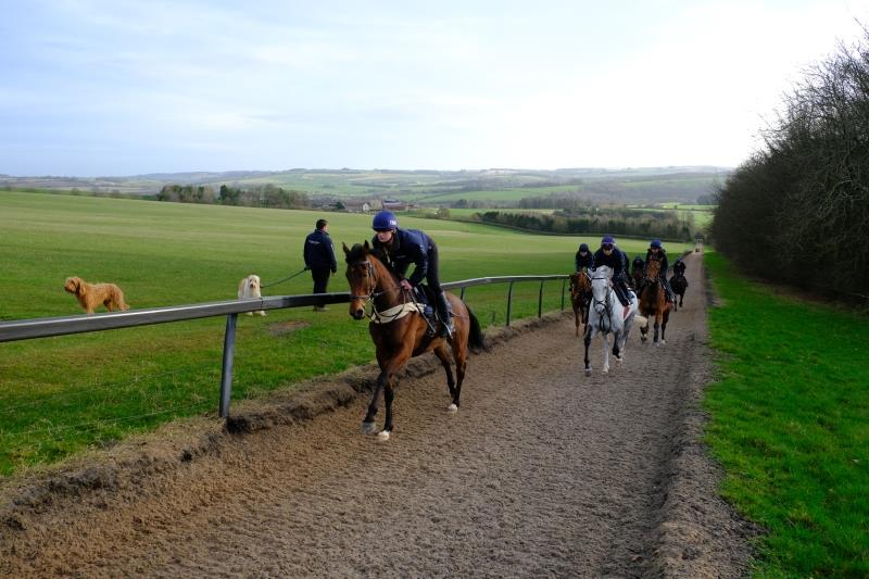 Rockys Treasure leading the string first lot