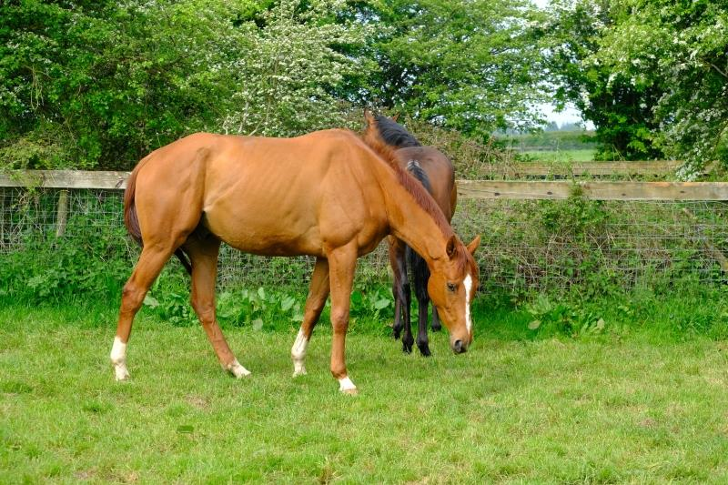 Prince Llywelyn who I bought at Todays sale at Doncaster 2 years ago.
