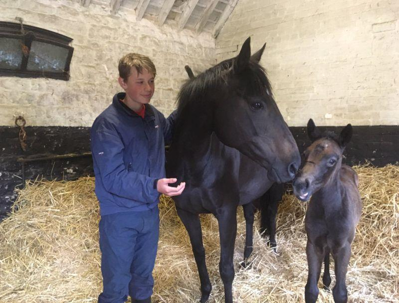 Archie with his old racing pony Flo with her foal.. Now owned by Nico and Serena de Boinville.