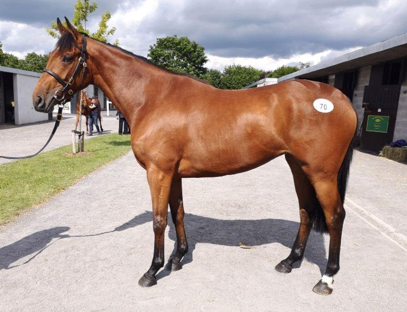Lot 70 - 3year old filly by Flemensfirth