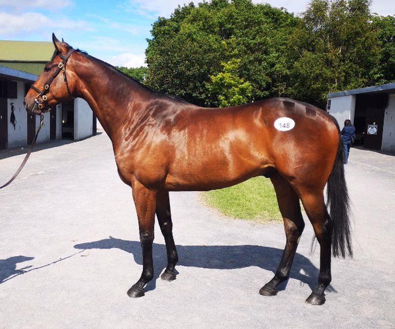 Lot 148 - 3 year old gelding by Yeats