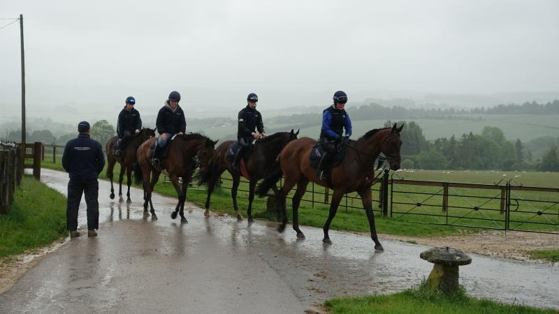 My summer jumping string heading to the gallops...
